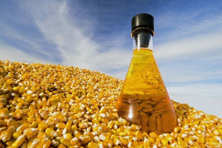 Corn is used as a feedstock used for biodiesel (biofuel).
