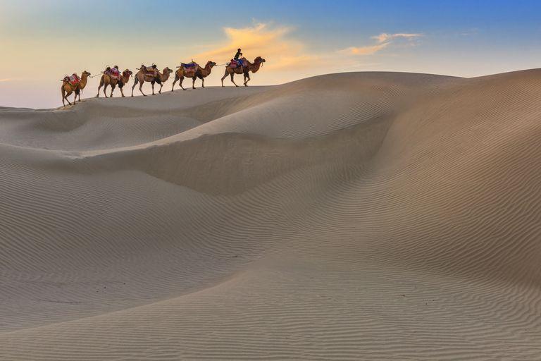Camel Caravan Travel in Dessert