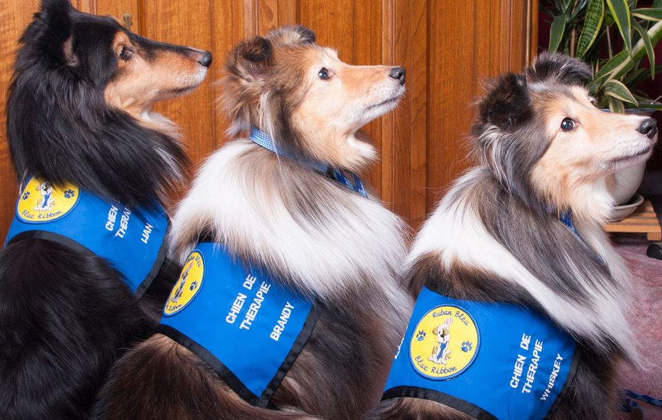 The Montreal Dog Show 2014 edition features Blue Ribbon therapy dogs.