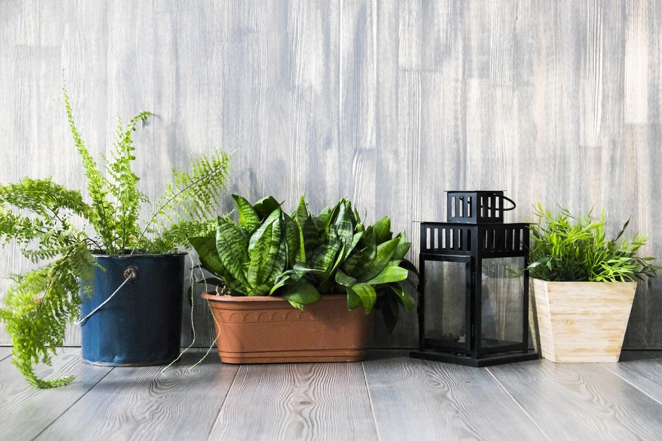 Container plants on floor