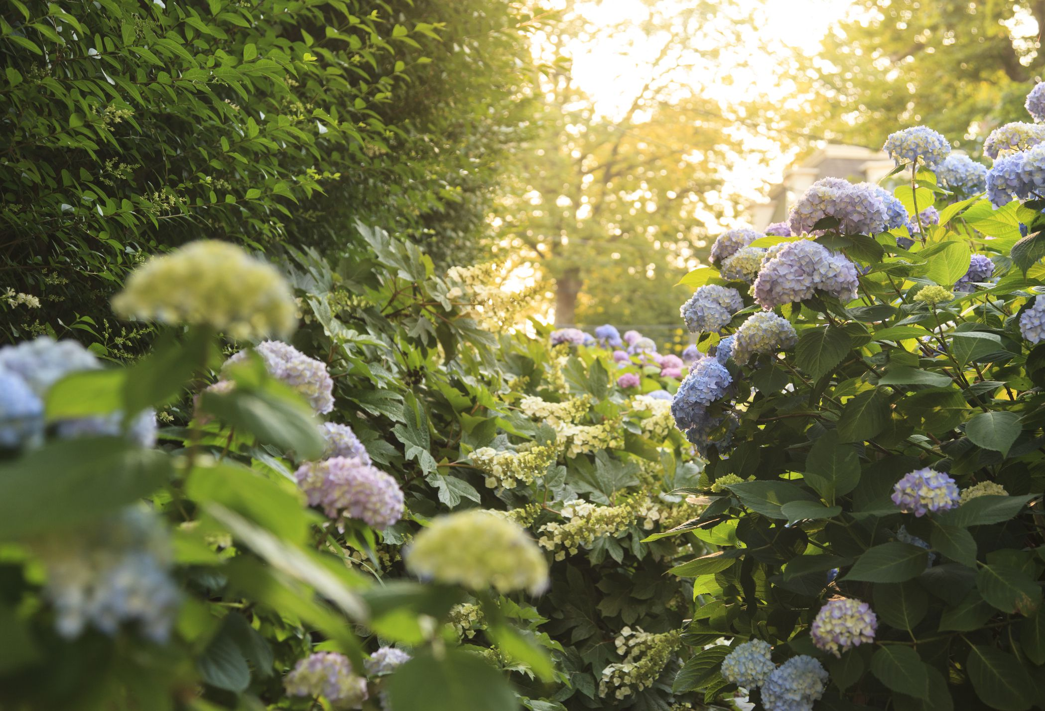 how and when to transplant trees and shrubs
