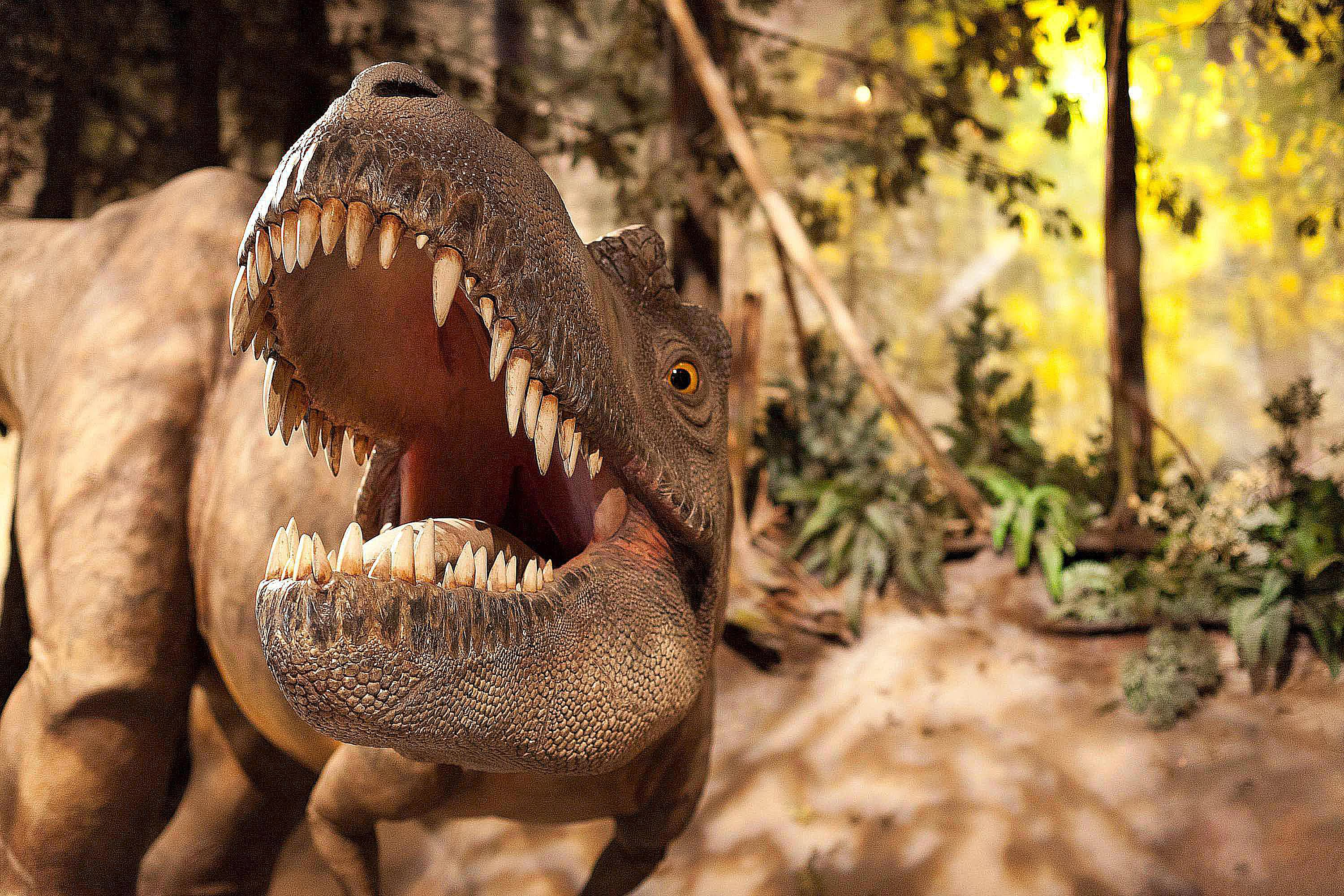 pictures and profiles of tyrannosaur dinosaurs