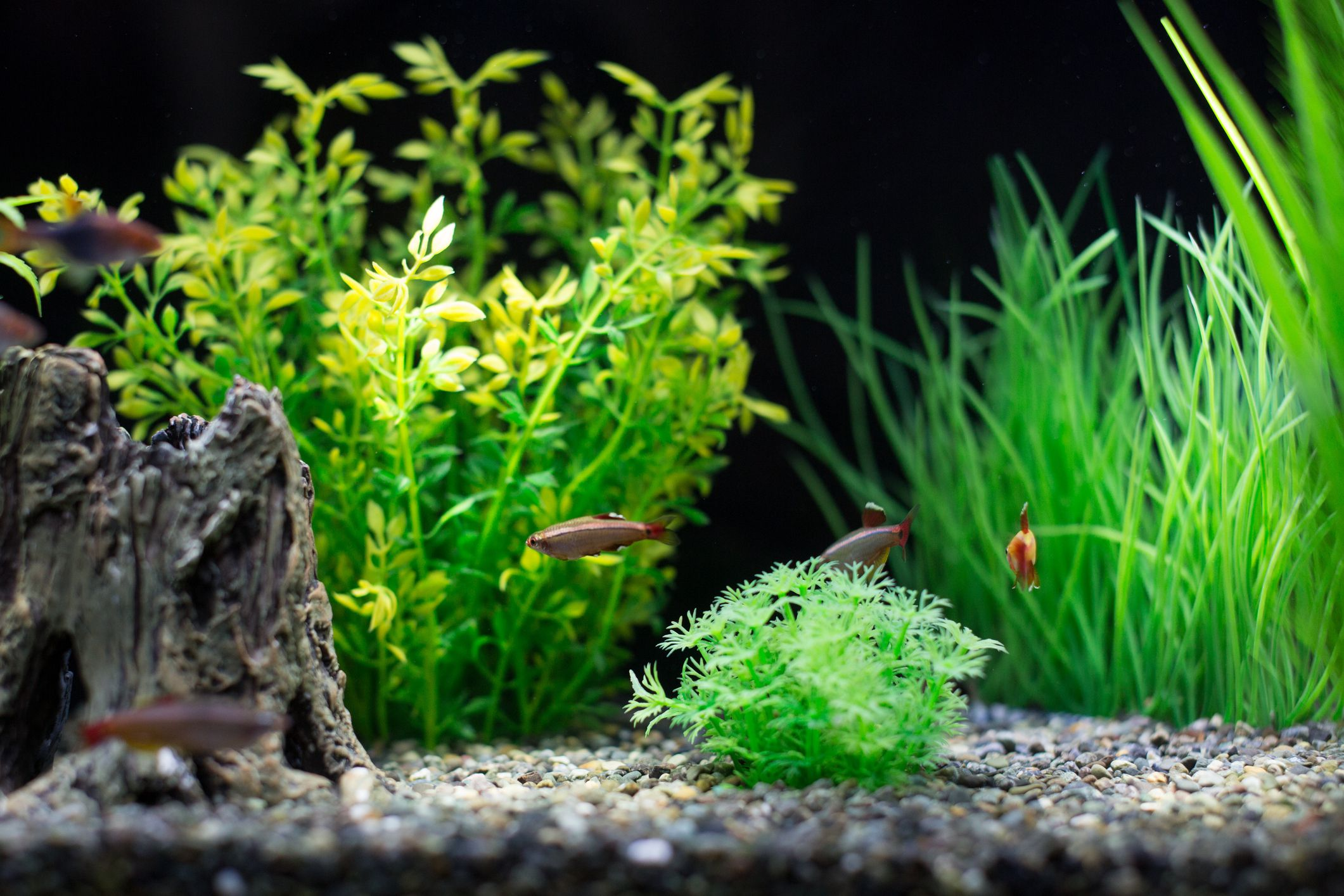 Problems With Tap Water in Saltwater Aquariums