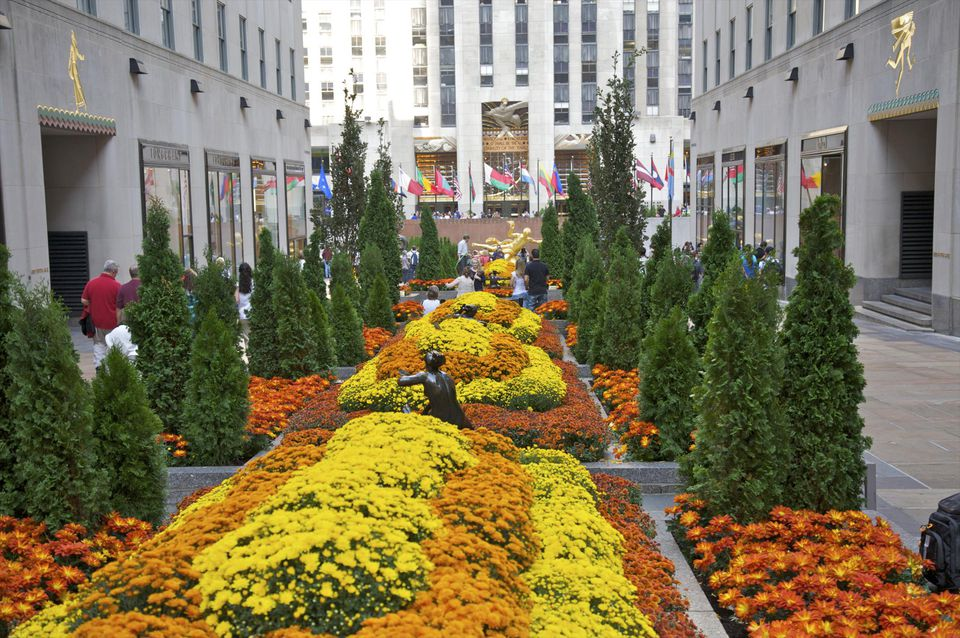 Orange and yellow fall plantings