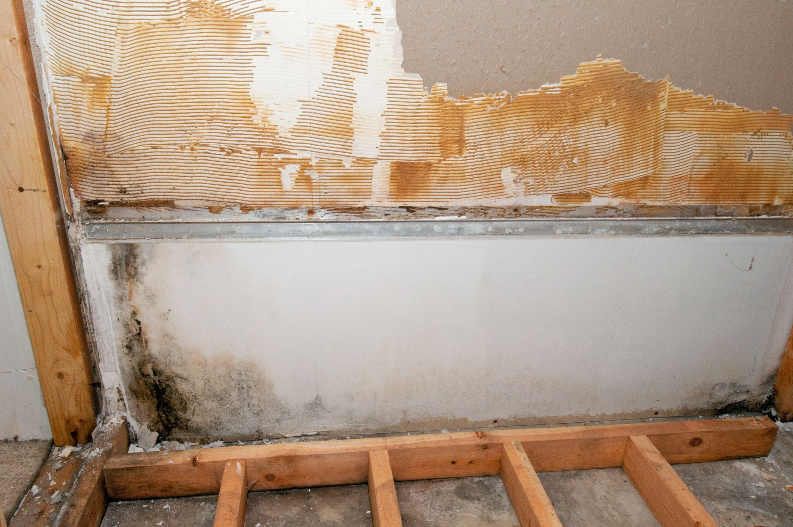 is mold remediation just a big scam