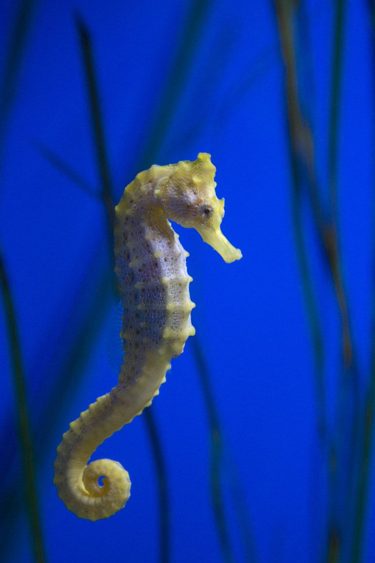 how to take care of a seahorse
