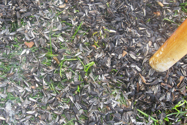 easy tips to clean under bird feeders