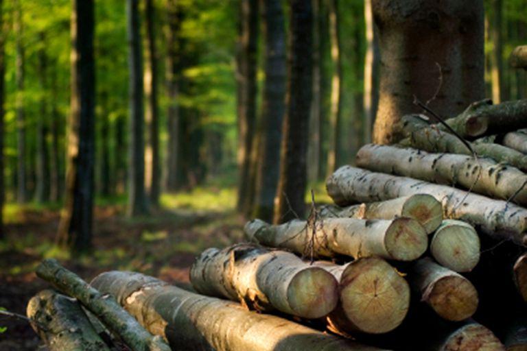 Felling trees creates edge habitats.