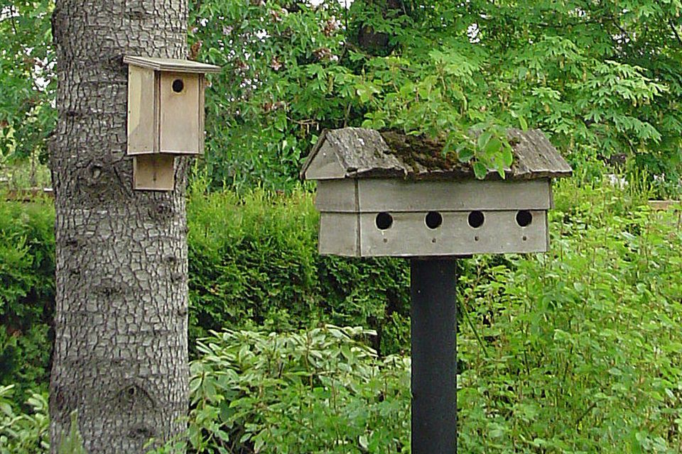 How to hang a birdhouse mounting a nesting box for Types of birdhouses for birds