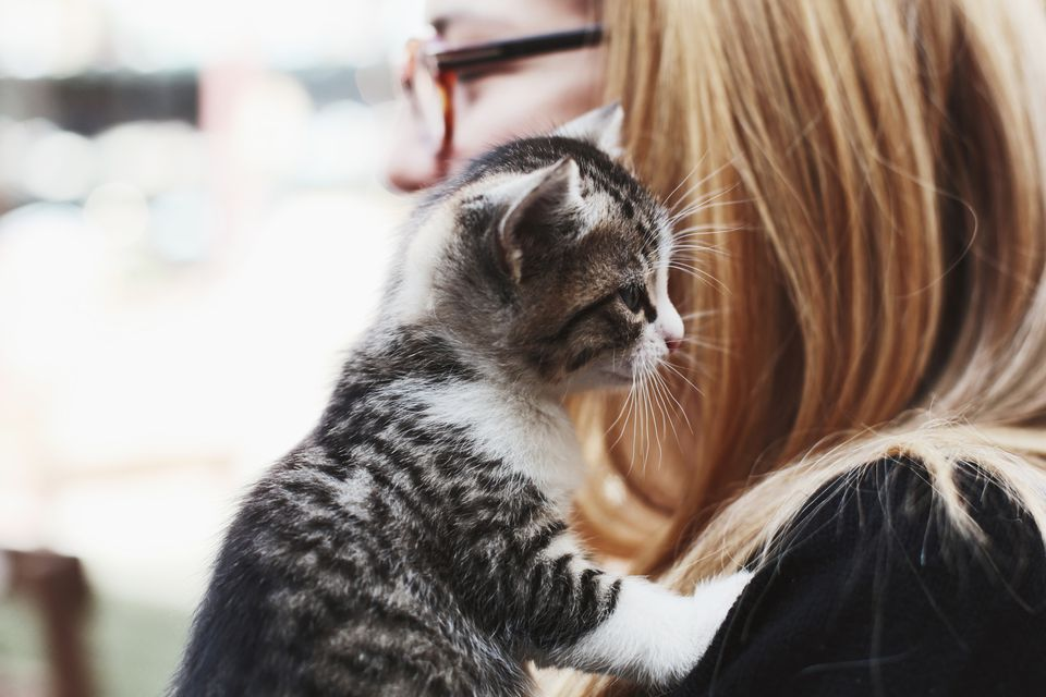 cat playing with owners hair