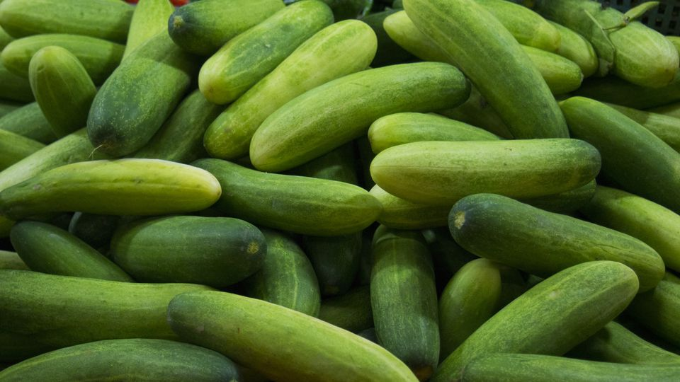 Pile of fresh green cucumbers