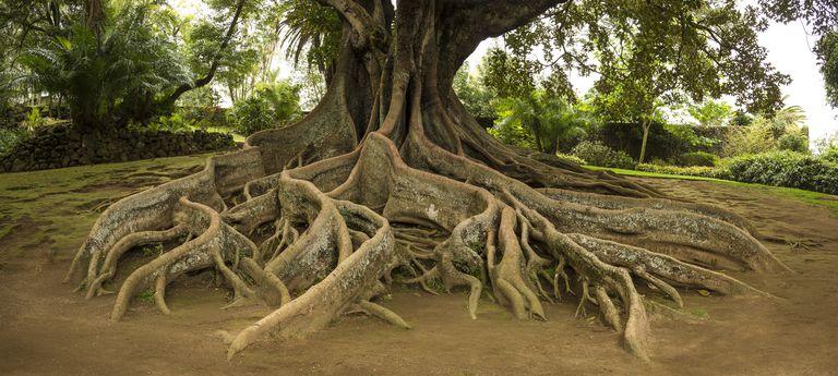 What Is Root Metaphor?