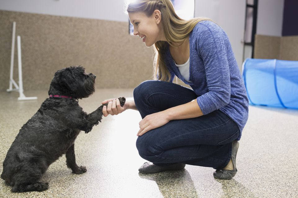 dog trainer with dog shaking paw