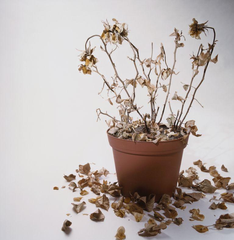 Planta sin luz solar