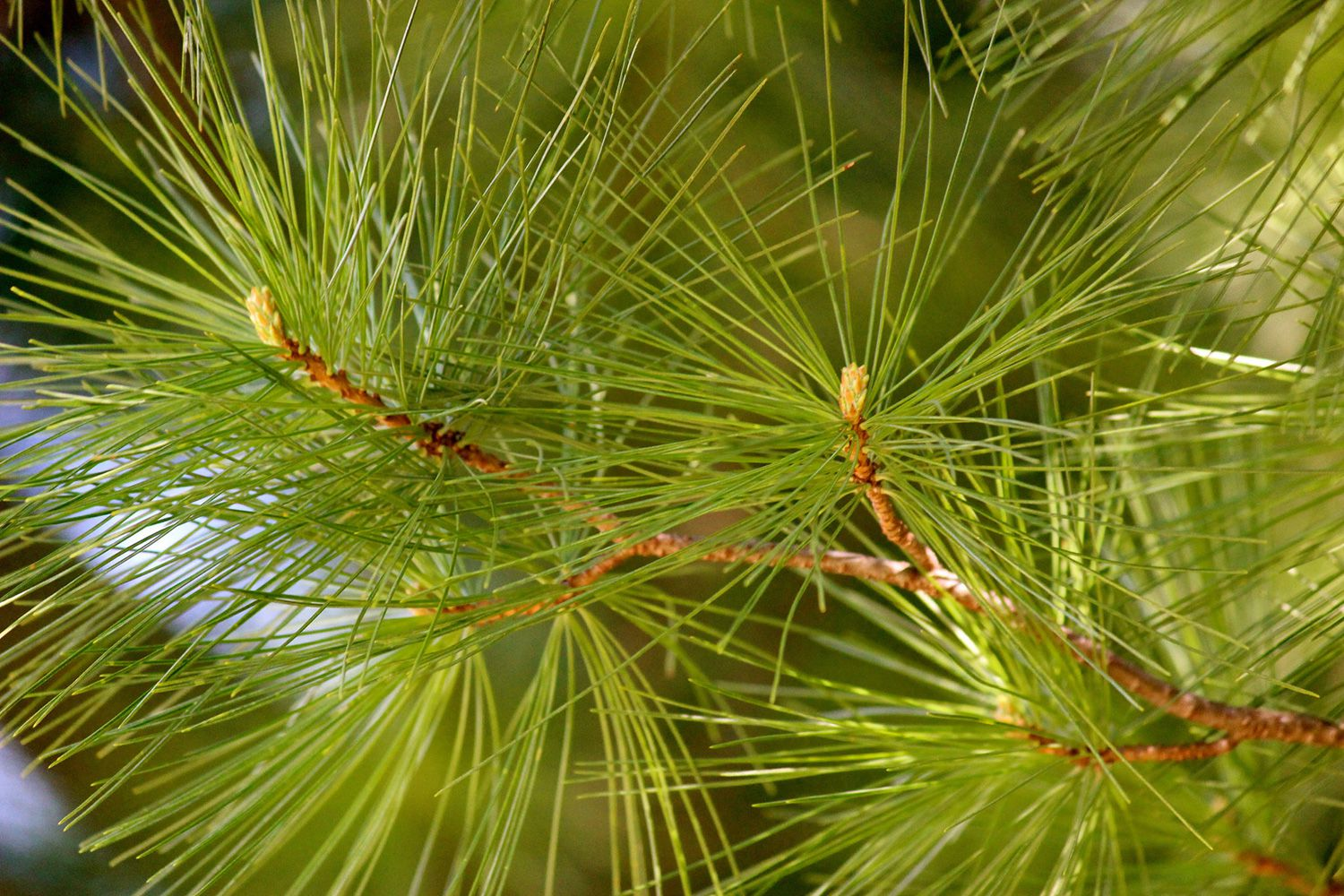 A Beginner S Guide To Tree Identification