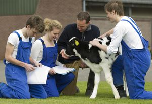 Vet Students with Cow