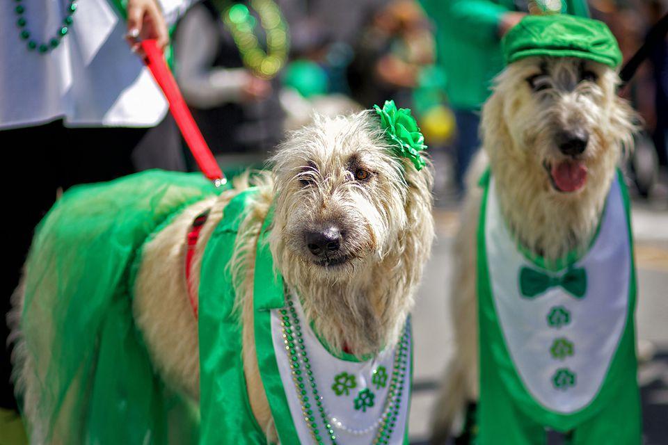 San Francisco St. Patrick's Day Parade
