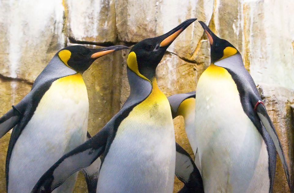 Montreal Biodome penguins.