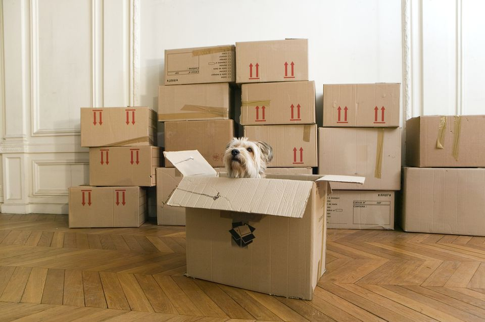 Dog in cardboard box in empty house