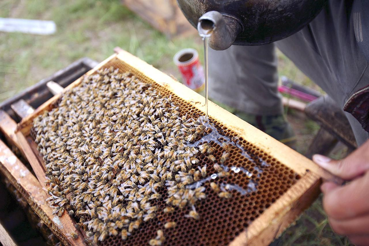 How to requeen a honey bee hive how when and why to feed your honeybees biocorpaavc