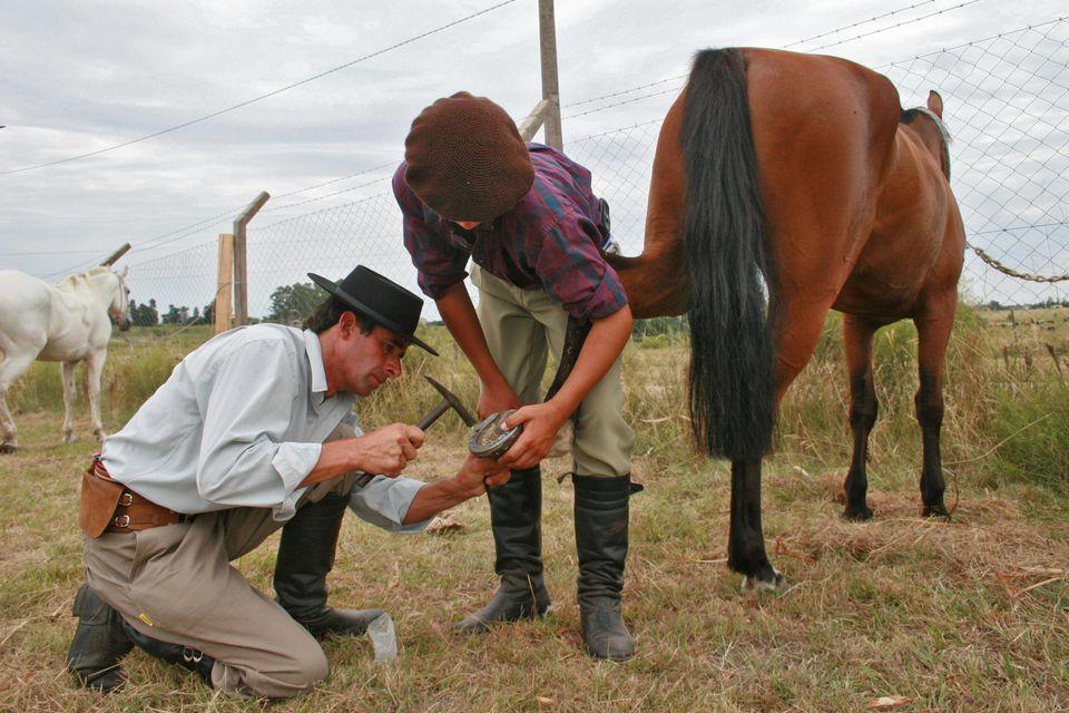 Uruguay, Montevideo, gauchos putting horse