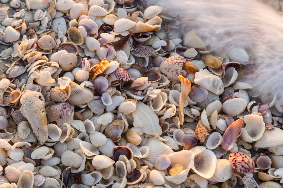 Incoming surf and seashells on Sanibel Island, Florida, USA