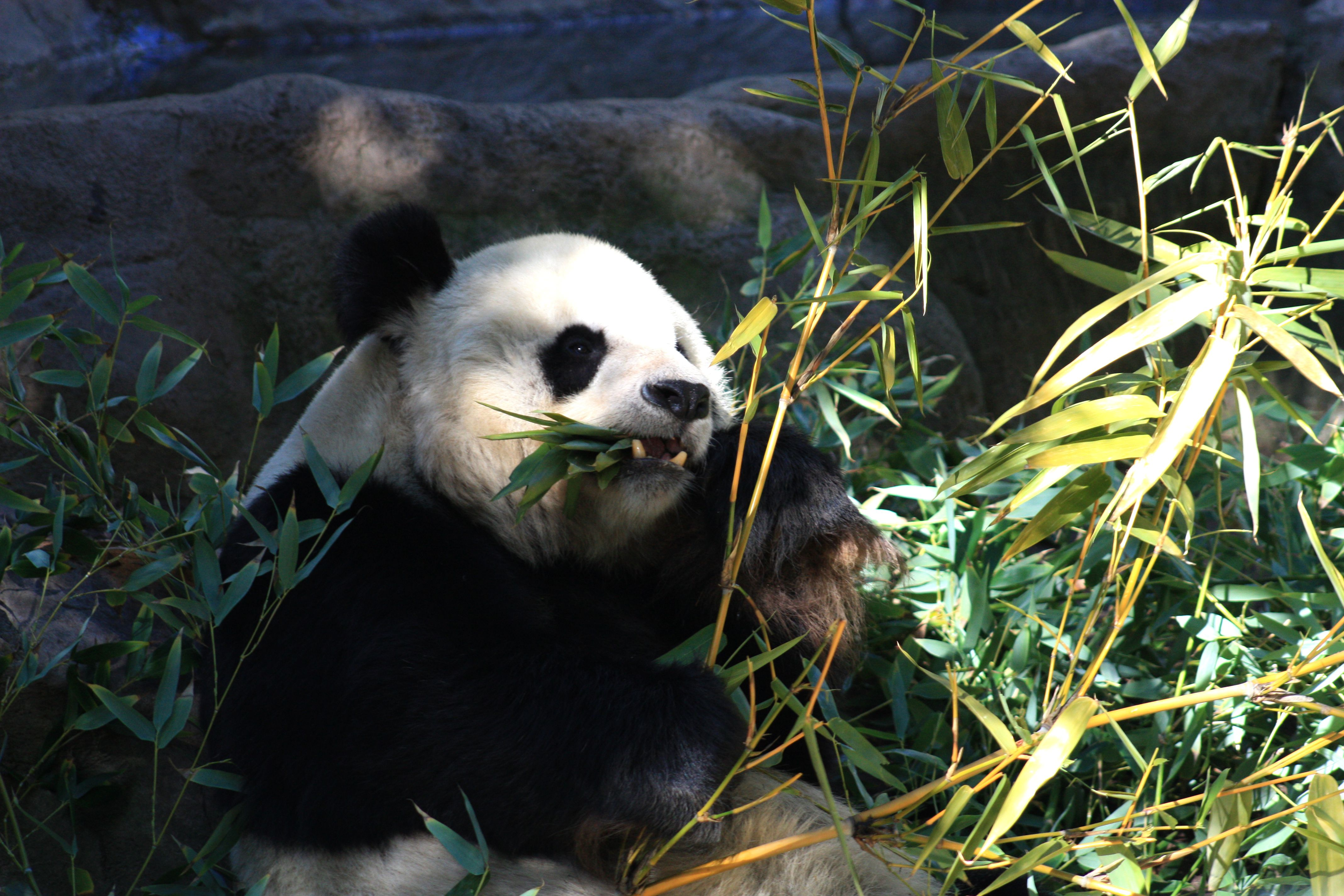 Popular Things To Do In San Diego Tested And Proven - 10 awesome zoos where you can spend the night