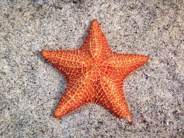 Close-up of orange starfish on sand