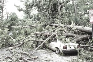 Tree Fell on Car