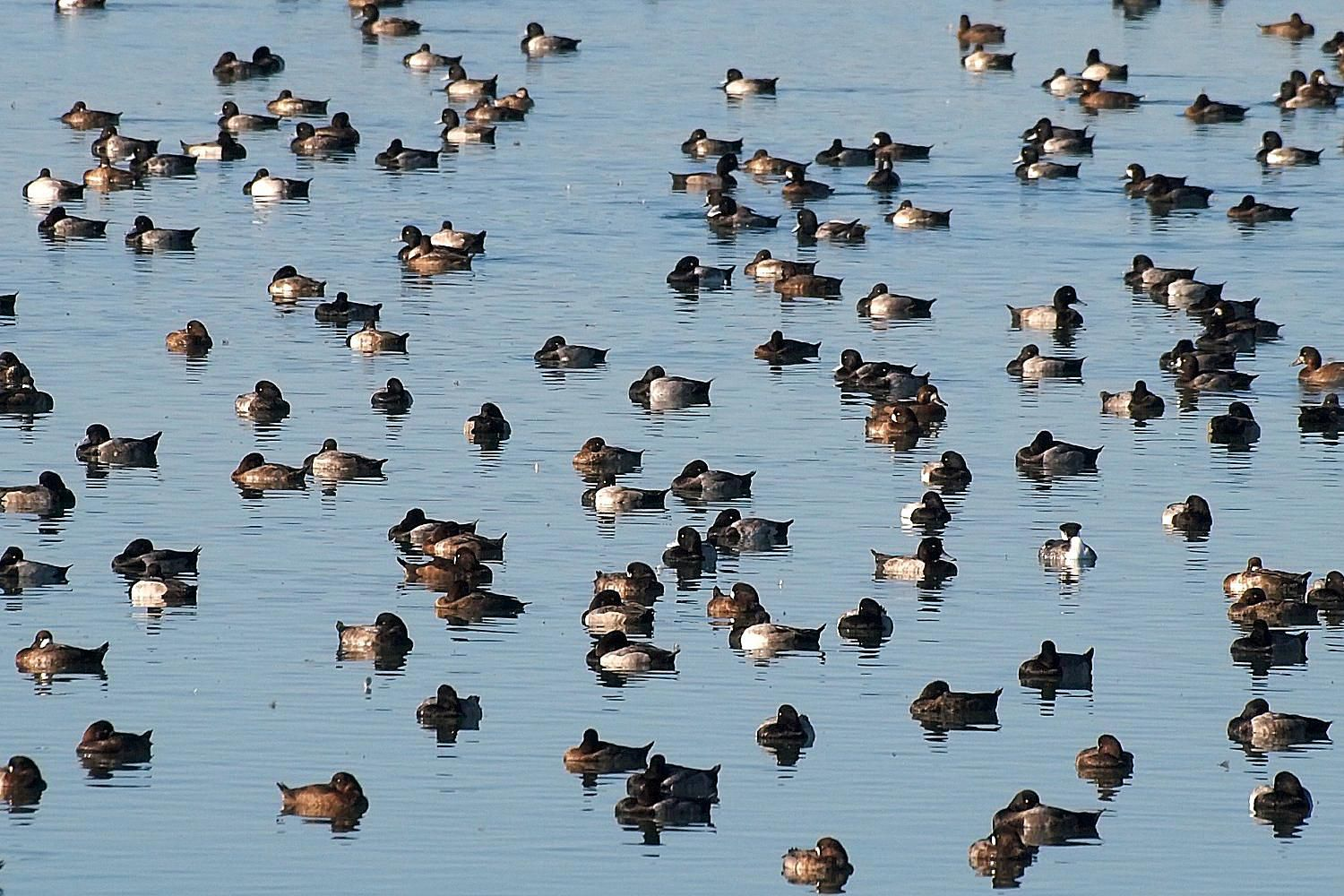 What does a flock of birds mean do you know the proper names for different bird flocks buycottarizona