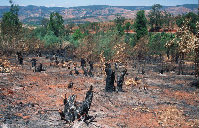 Slash and Burn, Central Highlands of Madagascar, 1998