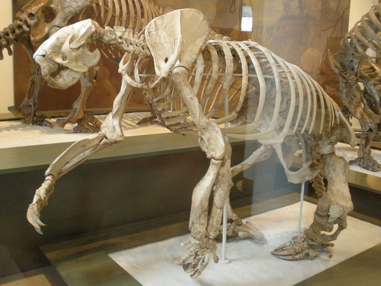 megalonyx giant ground sloth