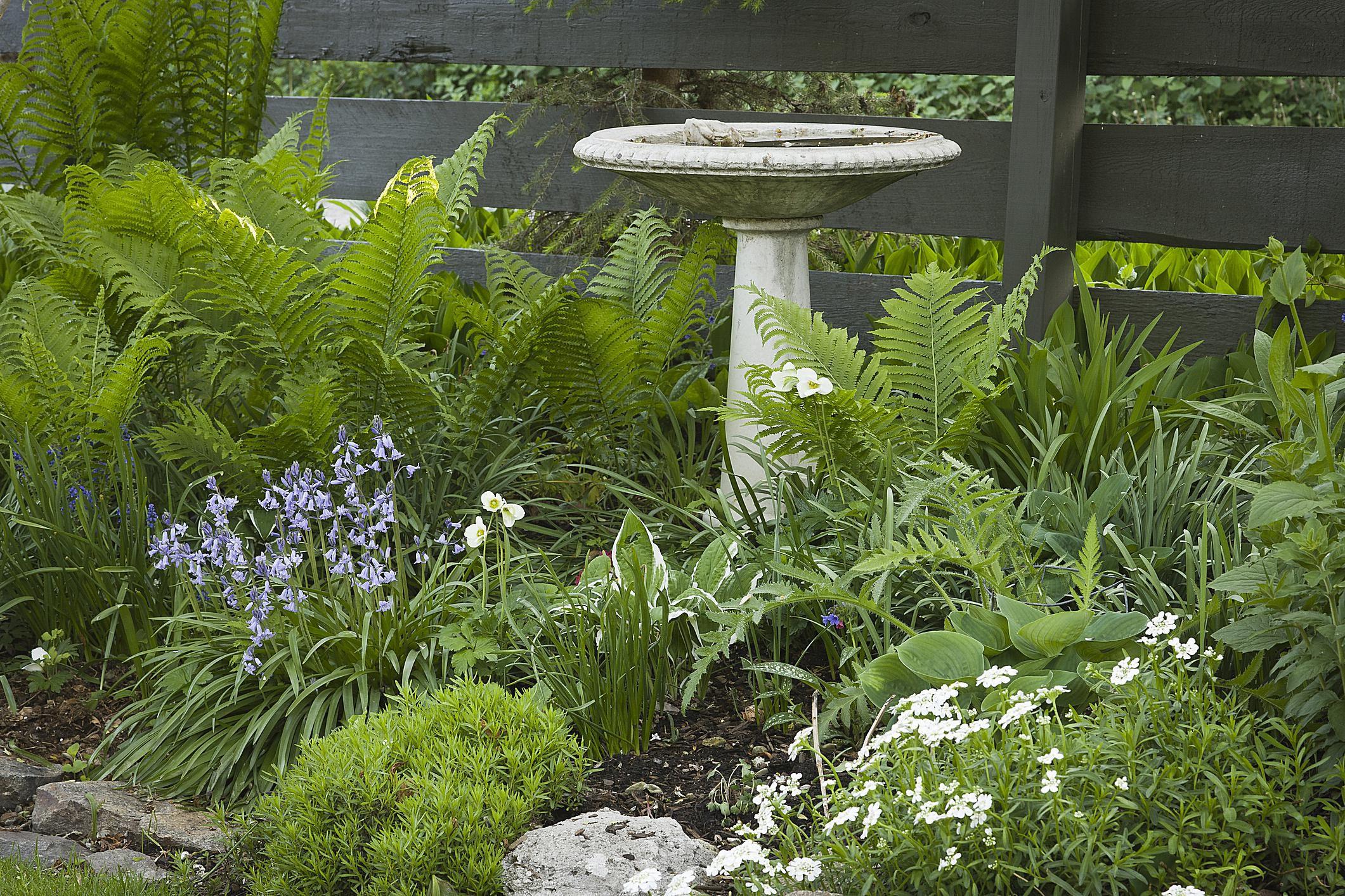 How to Design a Bird Friendly Landscape on Birds Backyard Landscapes id=67204