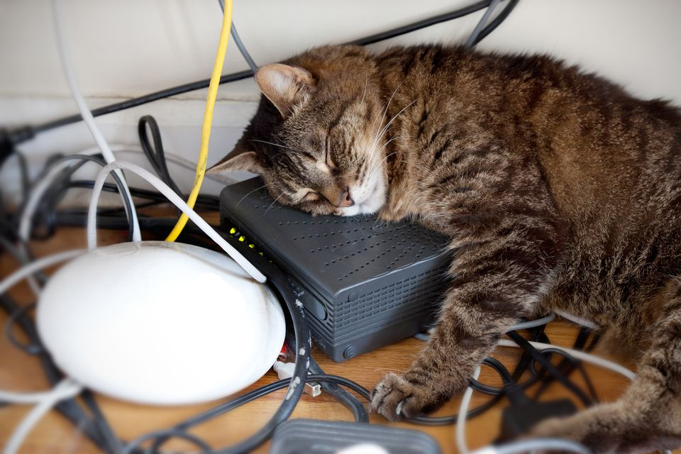 Cat laying on electrical cords