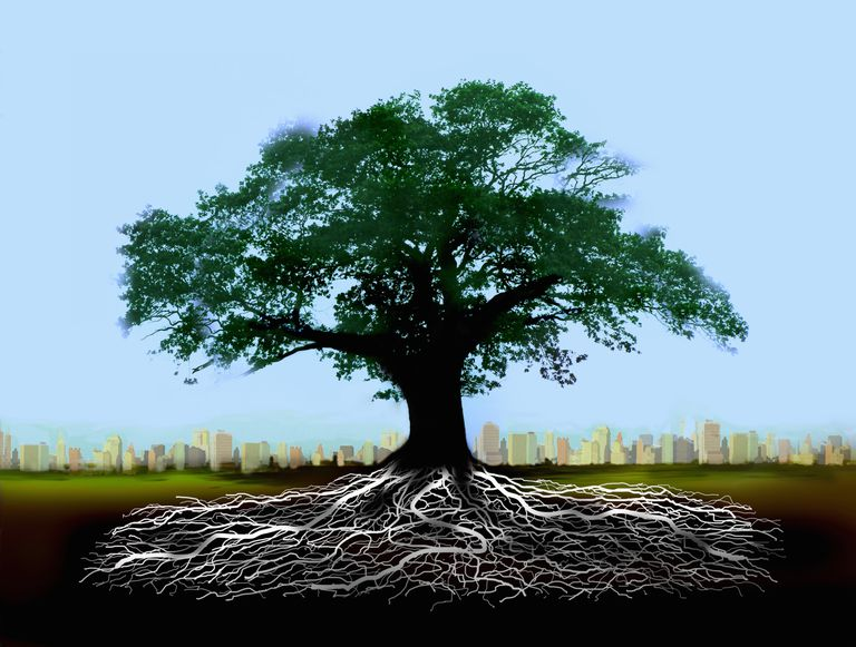 Tree with roots. Know your Greek and Latin Roots