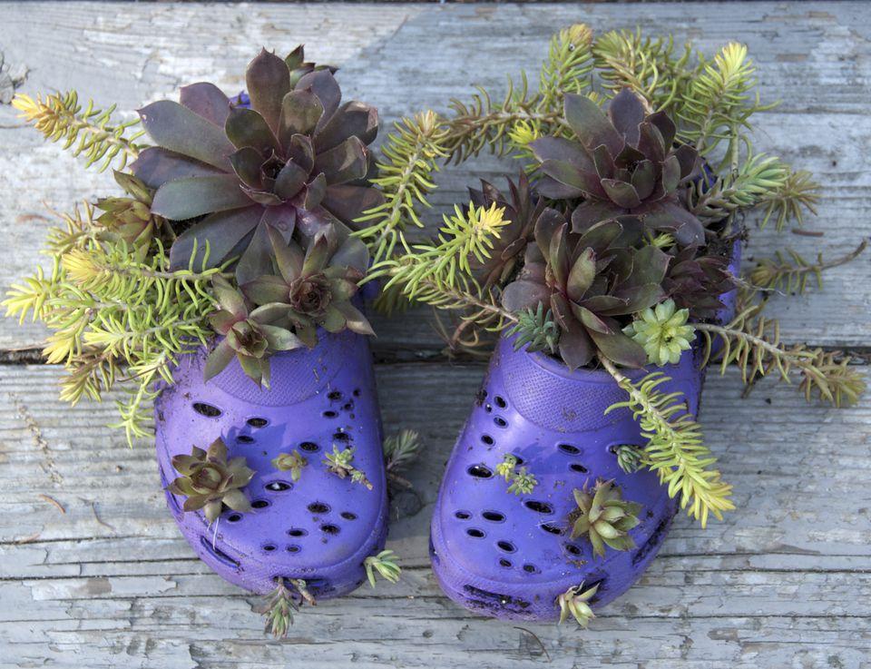 Bildresultat för container gardening ideas