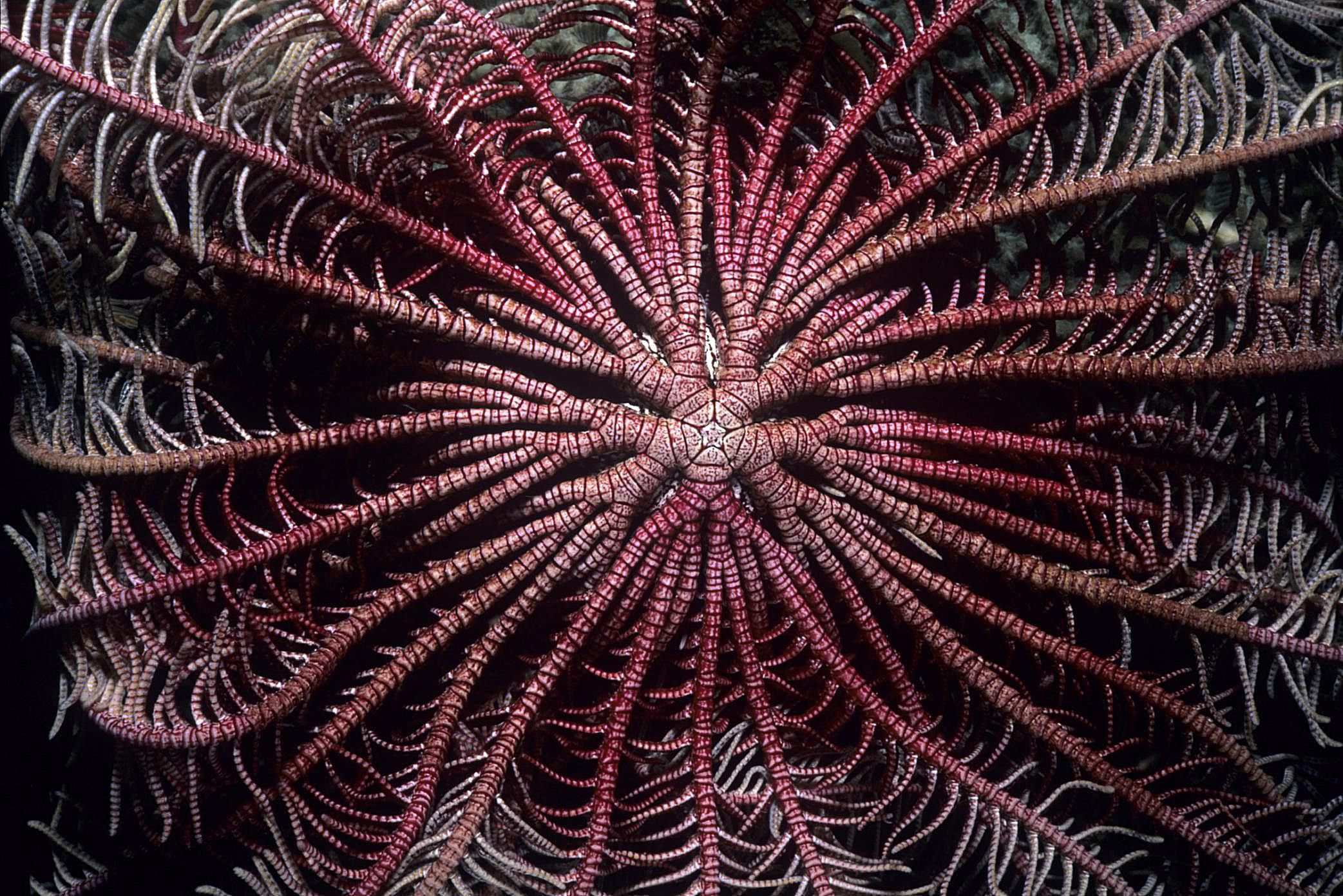 radial symmetry in marine life