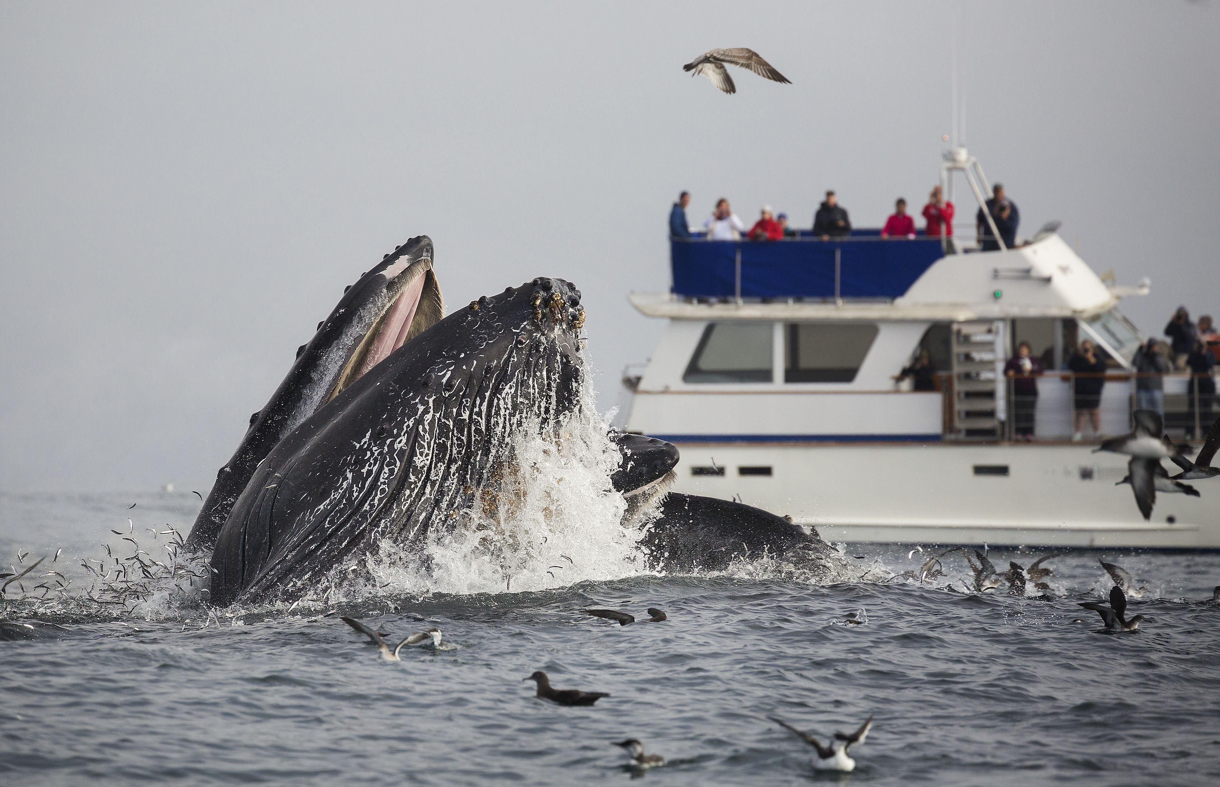 Santa Monica Beach Whale Watching Tours