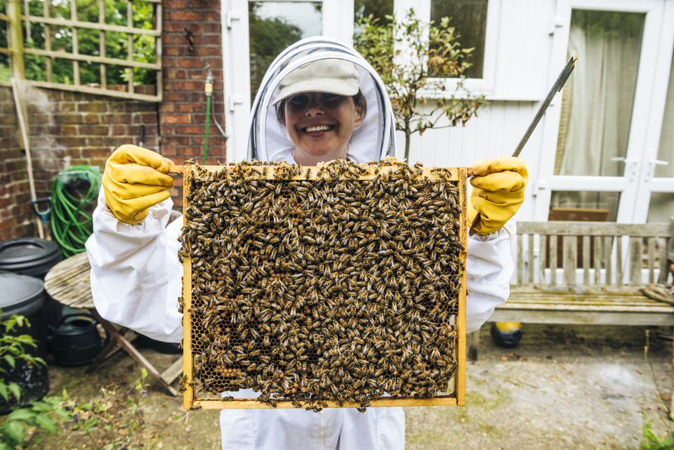 Becoming an Urban Beekeeper
