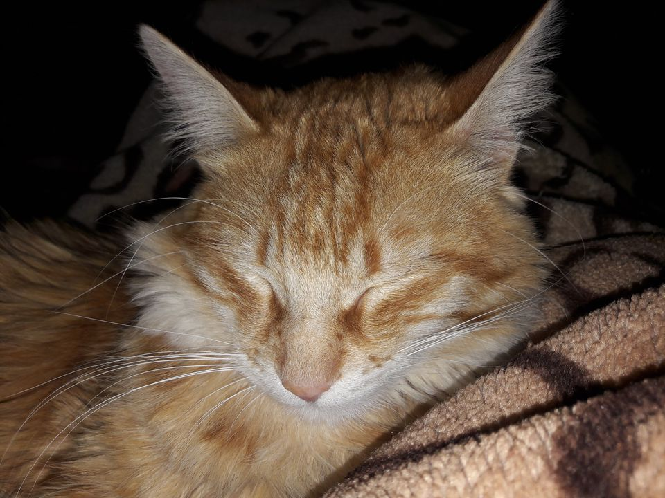 Close-Up Of Cat Sleeping On Bed At Home