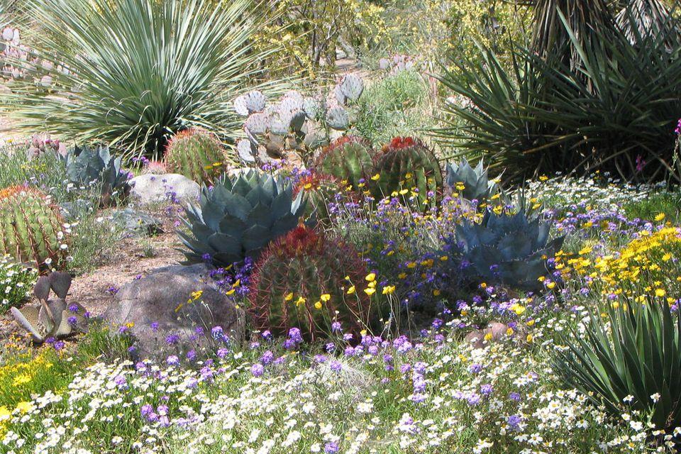 AZ wildflowers