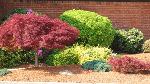 This photo shows and example of a colorful foundation bed.