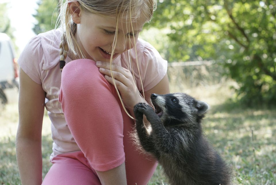 Little girl and a baby raccoon