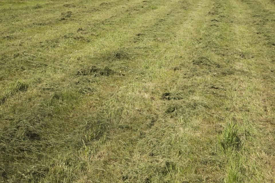 Mulch in grass