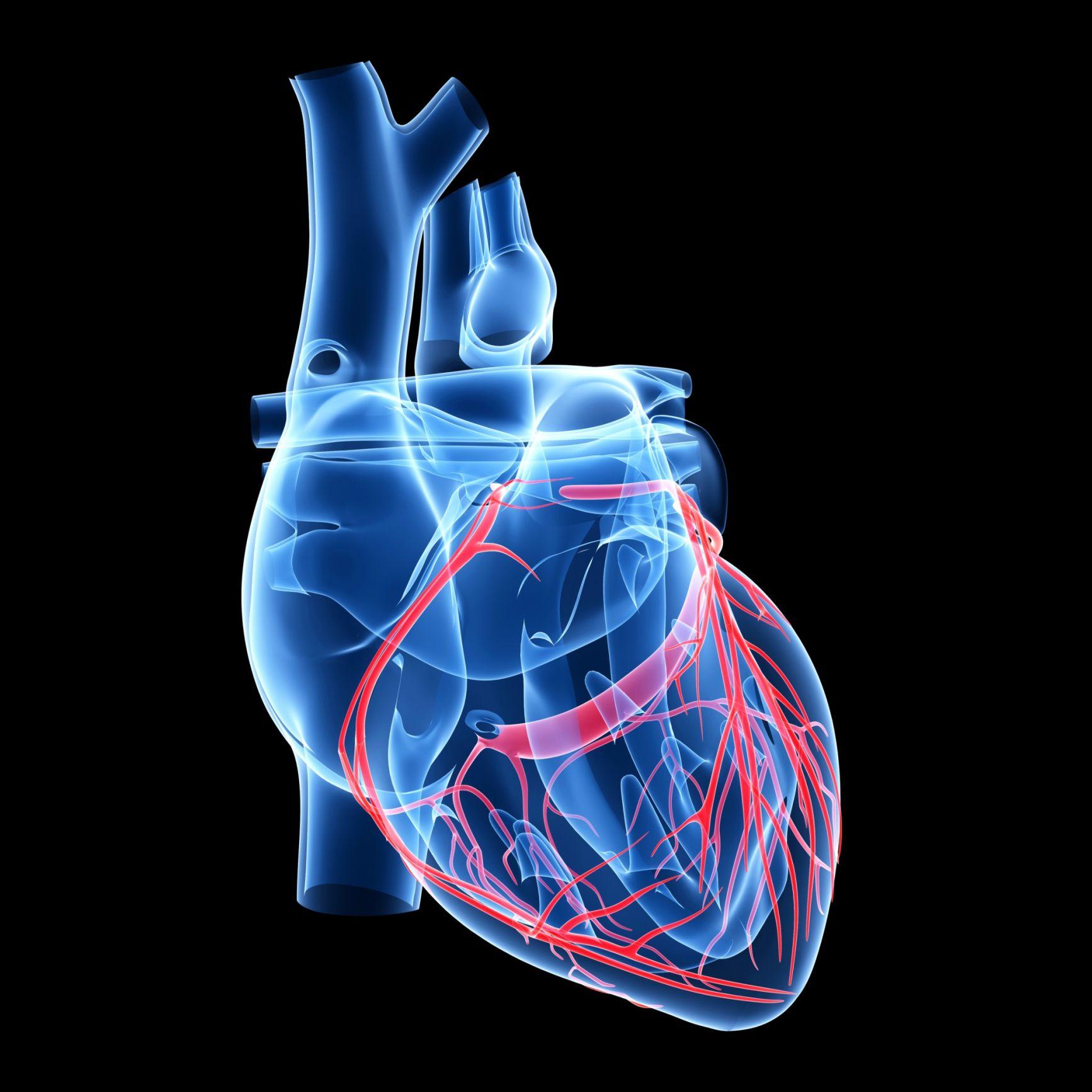 Capas del corazón: pericardio, endocardio y miocardio