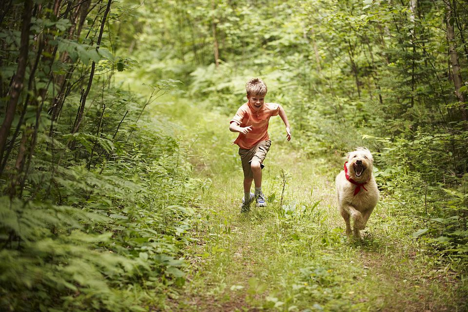 Boy and Dog Running in the Forest