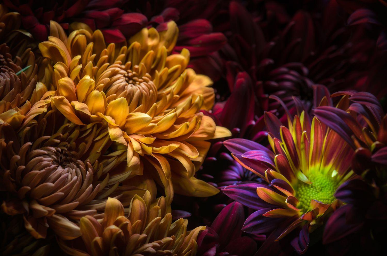Look Auto Insurance >> Infiorata - Flower Petal Art Festivals in Italy