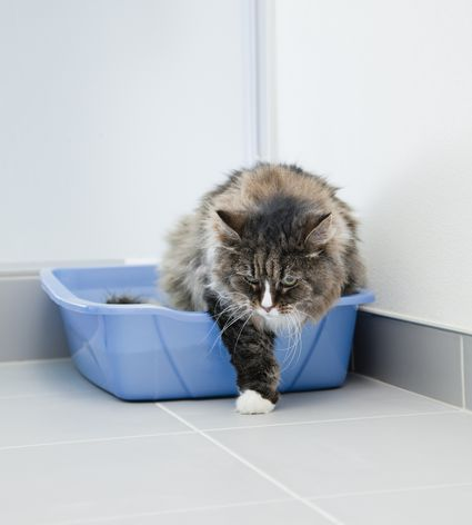 why does my cat go potty outside the litter box. Black Bedroom Furniture Sets. Home Design Ideas