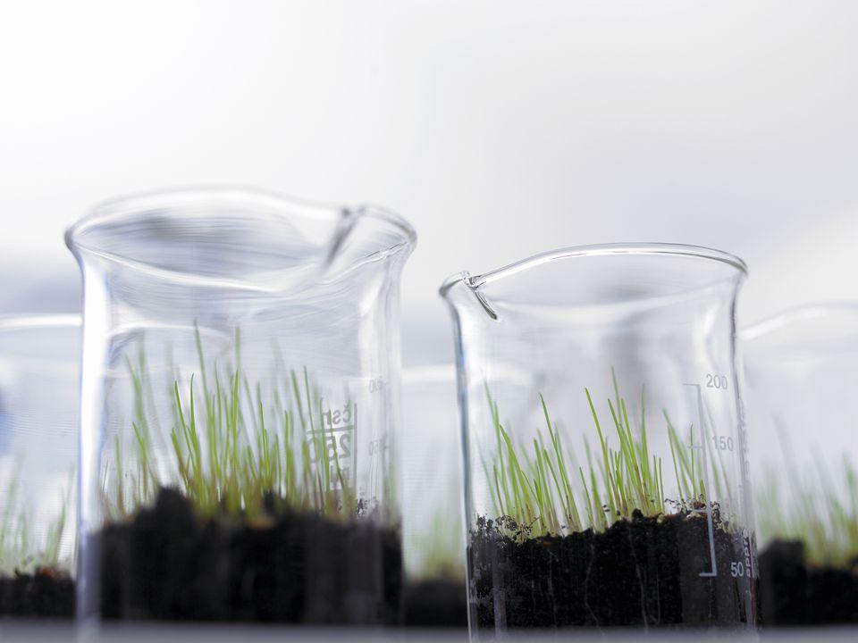 Beakers of soil