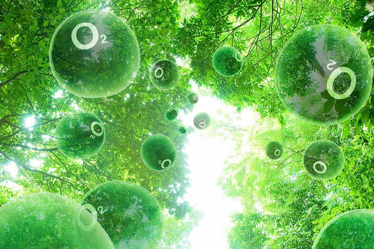Trees oxygen